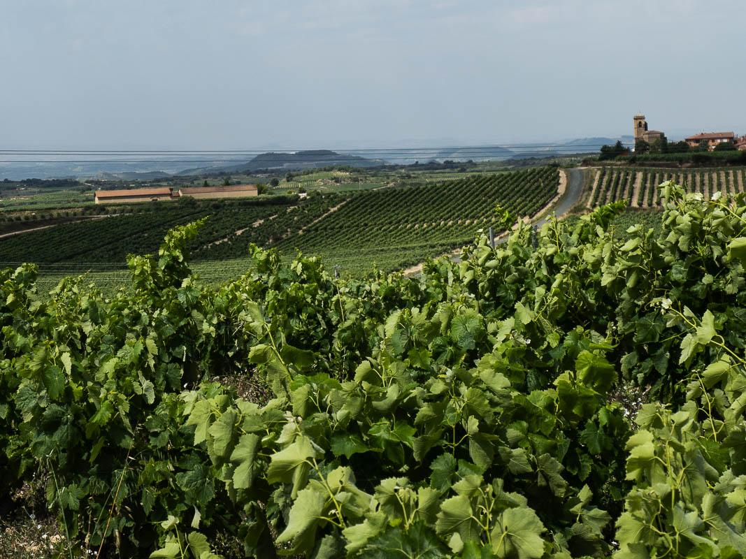 Viñas Basilio Izquierdo